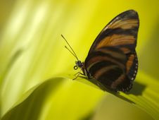 Free Butterfly Macro Closeup On Green Leaf Stock Photography - 21187422