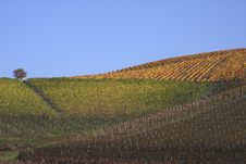 Free Vineyard Landscape In Autumn Stock Photos - 21187443