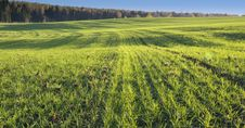 Free Green Field Stock Photography - 21188752
