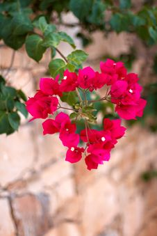 Free Small Red Flowers In The Shape Of A Heart Royalty Free Stock Photos - 21188818