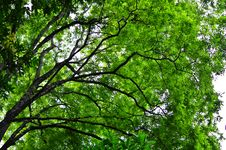 Free Big Green Tree Stock Photography - 21188832