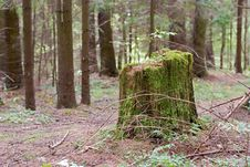 Free Green Stump 2 Royalty Free Stock Image - 21189526