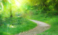 Free Pathway In Summer Park Royalty Free Stock Photo - 21189835
