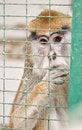 Free Monkey Stock Images - 21193674