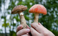 Free Two Mushrooms In Hands Of The Person Royalty Free Stock Images - 21196919