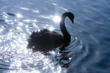 Free Silhouette Of Swan On Sparkle Water. Royalty Free Stock Photo - 21190825