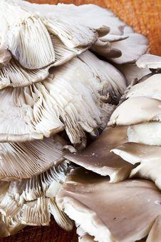 Pleurotus  Mushroom Royalty Free Stock Image