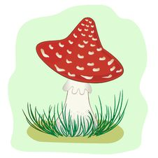 Mushroom Amanita Stock Image