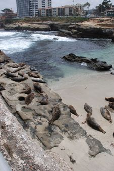 Free La Jolla Cove And Sea Lions Royalty Free Stock Images - 21193729