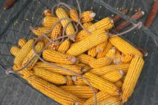 Free Dry Corns In A Basket Royalty Free Stock Photo - 21194045