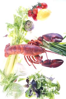 Free Crustacean Stock Image - 21195491
