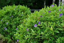 Free Green Bush Stock Photography - 21195562