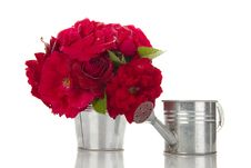 Free Bucket Of Red Roses Next To Watering Stock Photography - 21196462