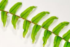 Free Green Leafs Stock Photography - 21197612