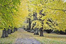 Autumn Colors Of The Trees In Park Royalty Free Stock Photos