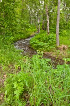 Free Meandering River In Forest Stock Images - 21199834