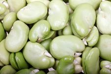 Free Broad Beans Stock Photography - 21199932