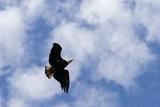 Free Soaring Eagle Stock Images - 2120084