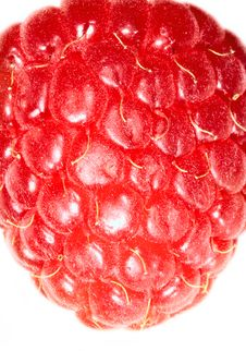 Free Raspberry Royalty Free Stock Photos - 2120598