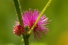 Free Pink Flower Stock Photo - 2120970