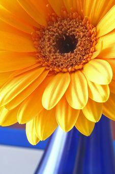 Free Orange Gerbera Stock Photography - 2121852