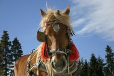 Free Beautiful Brown Horse 1 Royalty Free Stock Photos - 2121898