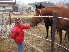 Free Feeding A Horse Stock Image - 2122901