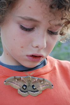 Boy Looking At Moth Royalty Free Stock Photo