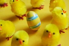 Free Easter Chicks & Egg Stock Photography - 2123772