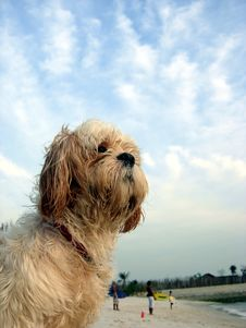 Free Cute Dog At Beach With Sky Stock Image - 2124511