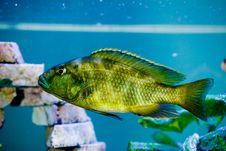 Free Predator Fish Stock Images - 2127764