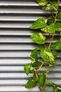 Free Green Leaf Stock Photo - 21202860