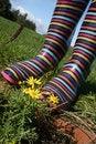 Free Stripy Wellington Boots Closeup Royalty Free Stock Photos - 21205858