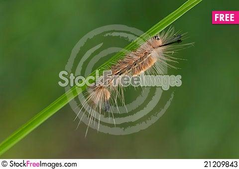 Free Caterpillar Stock Photos - 21209843