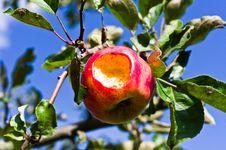 Free Eaten Apple Royalty Free Stock Photos - 21200238