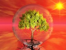 Free Tree In A Bubble Royalty Free Stock Image - 21201186