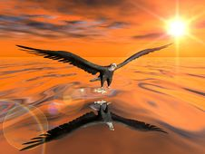 Eagle Over Water Stock Images