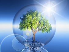 Free Tree In A Bubble Royalty Free Stock Image - 21201206