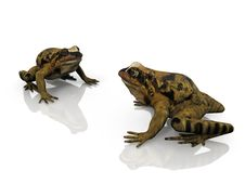 Free The Frogs Stock Photos - 21201213