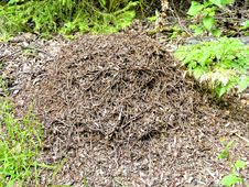 Free Ant Hill Stock Images - 21201334
