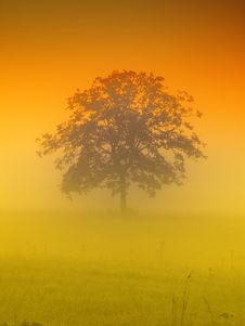 Free Tree In The Morning Royalty Free Stock Photos - 21201448