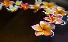 Free Frangipani Flower In Water Bowl Royalty Free Stock Image - 21203296
