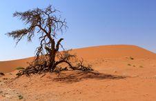Free Sossusvlei Sand Dunes Landscape In Nanib Desert Stock Photo - 21203770