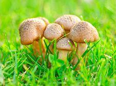 Free Edible Mushrooms Royalty Free Stock Photography - 21203937