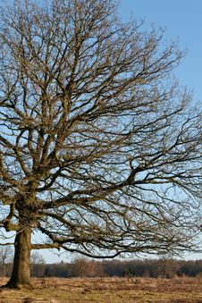 Free Tree In Winter Time Stock Photography - 21204402