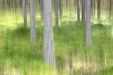 Free Abstract Blurry Forest Scene Royalty Free Stock Photo - 21205715
