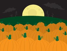 Free Pumpkin Patch Stock Images - 21208104