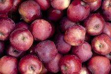 Free Apple Stock Photo - 21209850