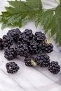 Free Blackberries Royalty Free Stock Photo - 21210625