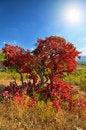 Free Colorful Autumn Trees Stock Photos - 21213183